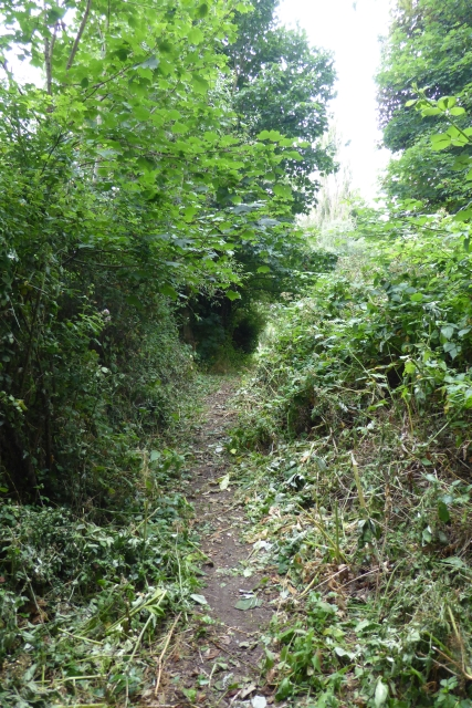 Recently mown path