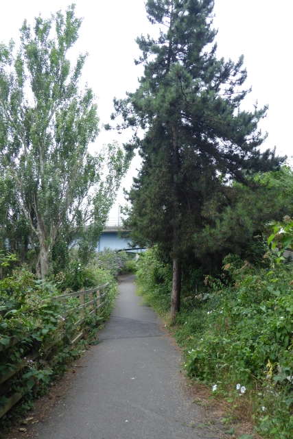 Cycle path along the river bank