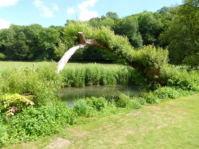 Natural willow arch by the River Coln
