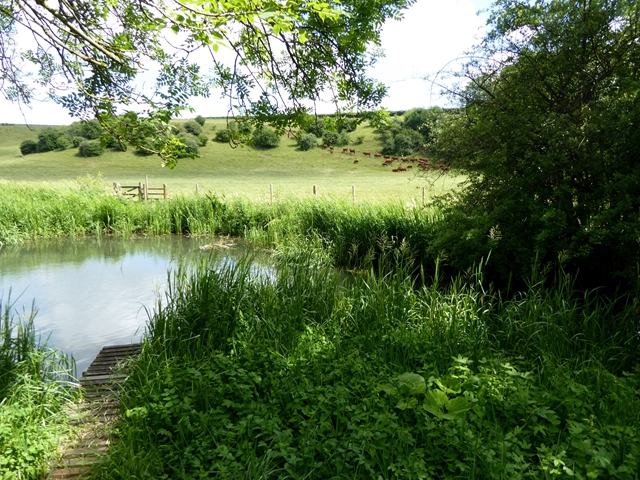 The River Coln at Quenington