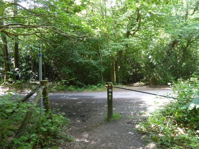 London Countryway in Kent (219)