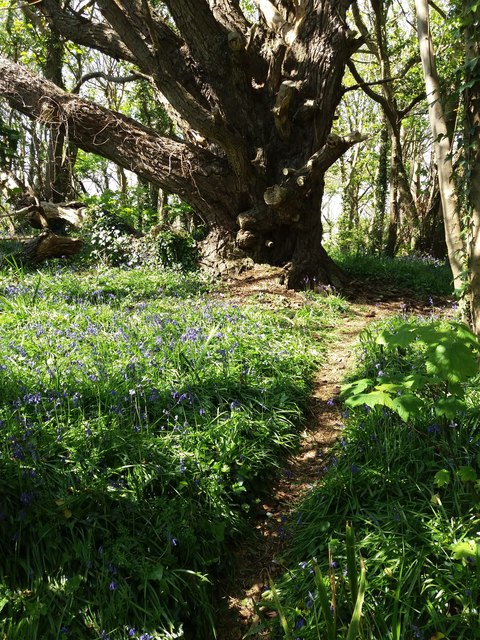 Mothecombe: on Owen's Hill