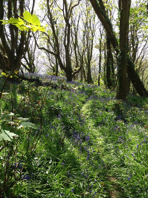 Owen's Hill: bluebell wood