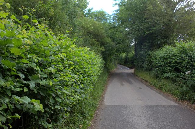 Hog Lane near Woodfield Spring Farm