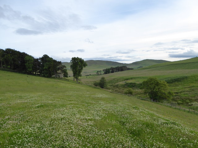 Clover-filled field near Kirklawhill