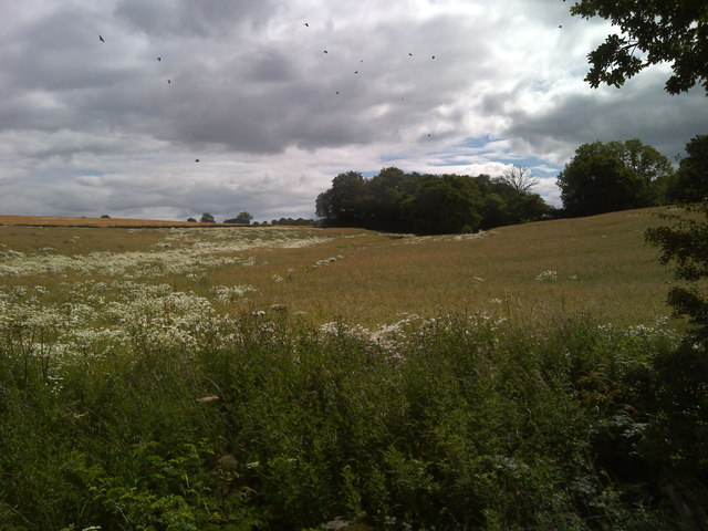 Trackside fields