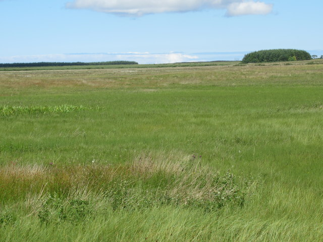 View north-west over Burnside croft near Wick