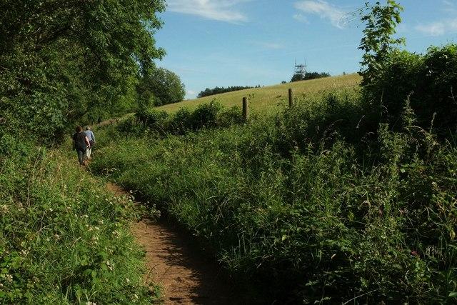 Wychavon Way beside Long Plantation #1