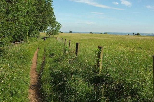 Wychavon Way beside Long Plantation #4