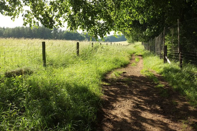 Wychavon Way beside Long Plantation #5