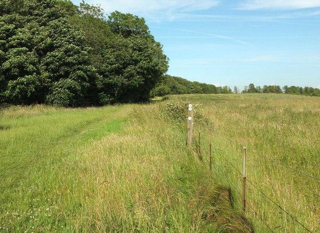 Wychavon Way beside Long Plantation #6