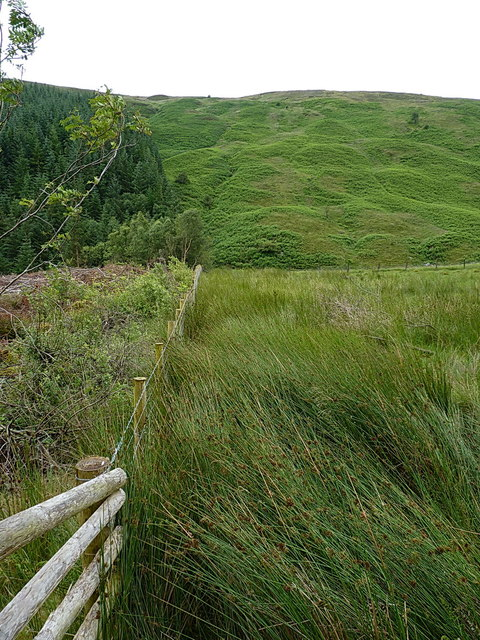 Edge of the forest above Hafod Fudr