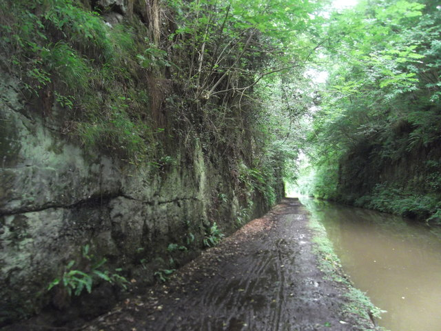 Dank and dreary Woodseaves Cutting