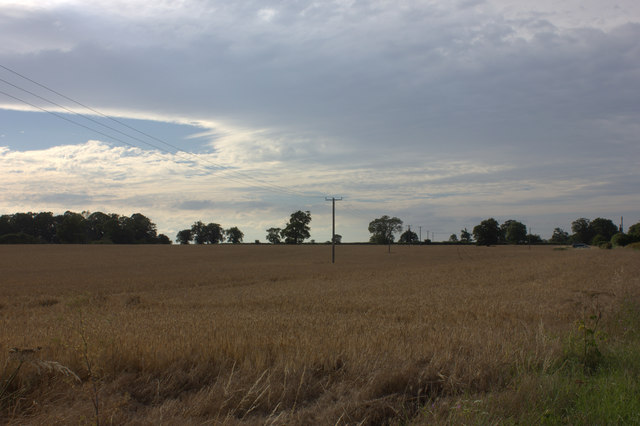 Field by Mill Lane