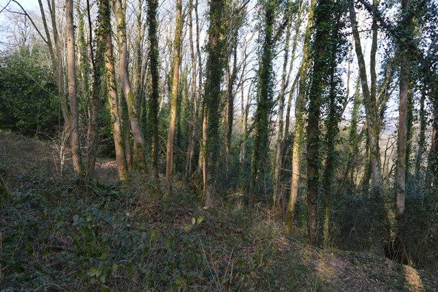 Leigham Wood