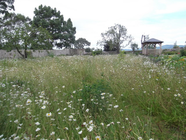 Wild flower meadow at Nantclwyd y Dre