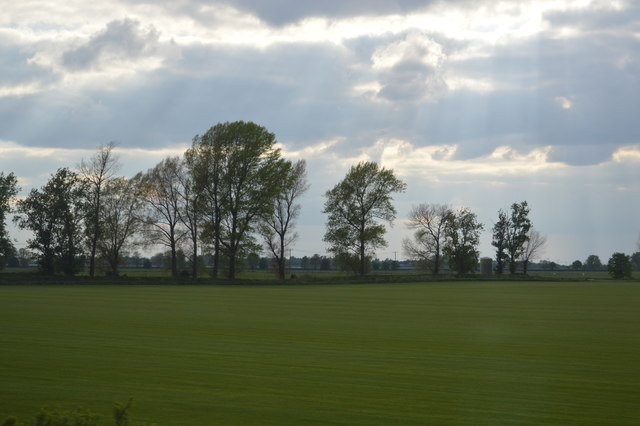 Trees, Stretham Mere