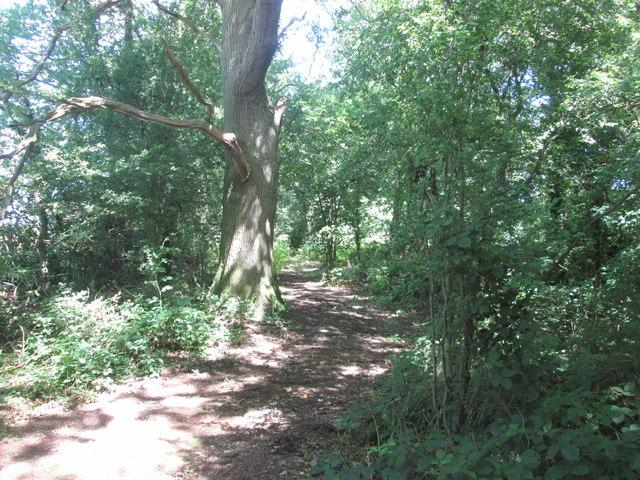 Bridleway through the woodland north of Batrudding Farm