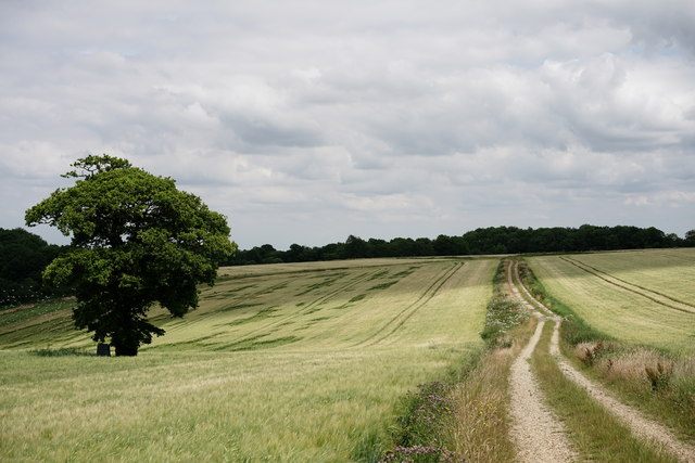Footpath Near Woldingham