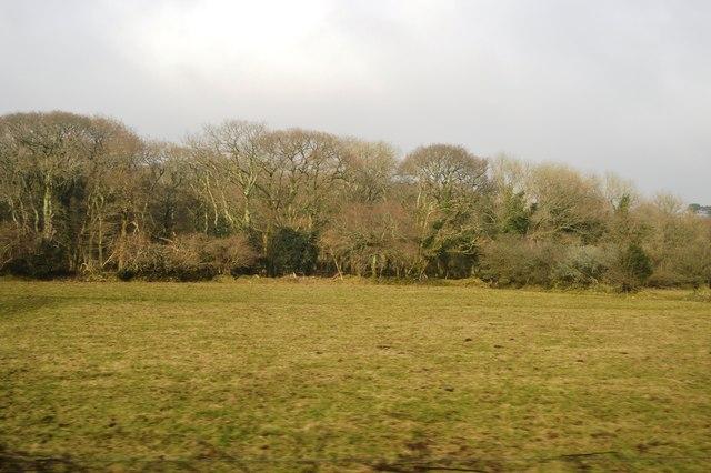 Woodland near Rutt House