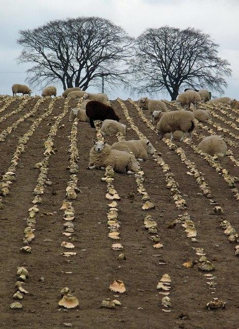 Farmland near Balblair, Ross And Cromarty