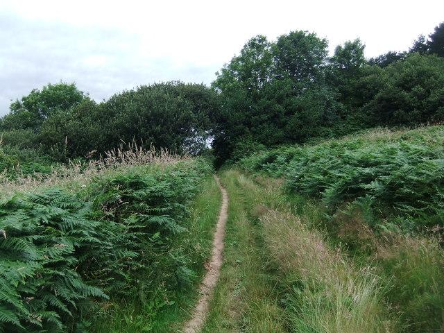 Coastal path by Carrick Roads