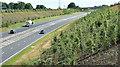 J3194 : Road landscaping, Lismenary, Ballynure - July 2017(1) by Albert Bridge