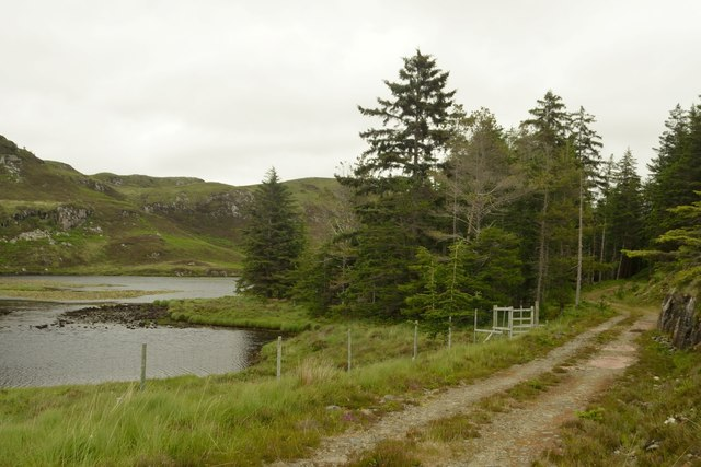 New Track in the Duartmore Forest, Sutherland