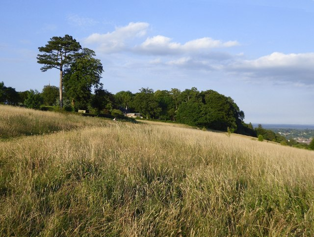 Meadow at the crest of the North Downs scarp, Ranmore