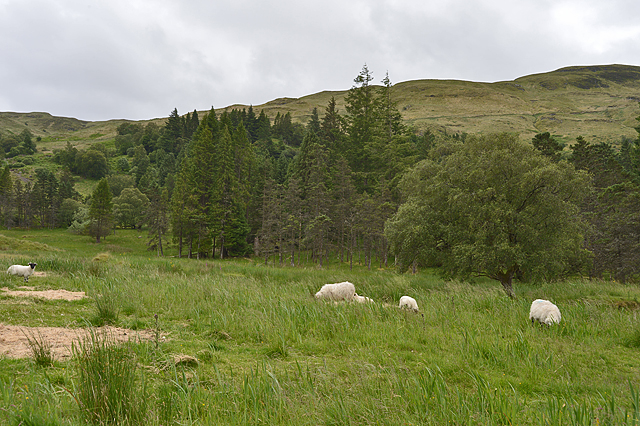 Rough grazing near Clachadow