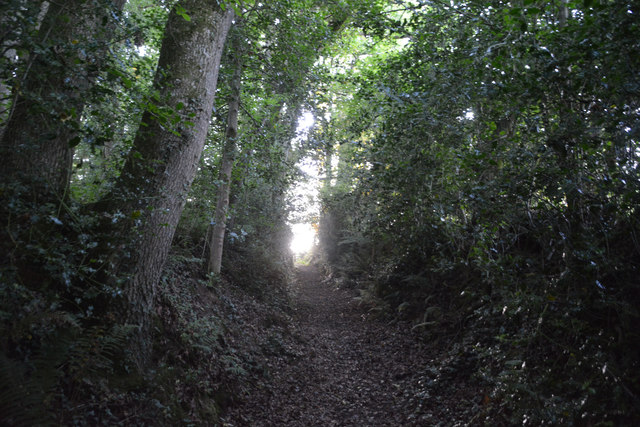 Mid Devon : Woodland Path