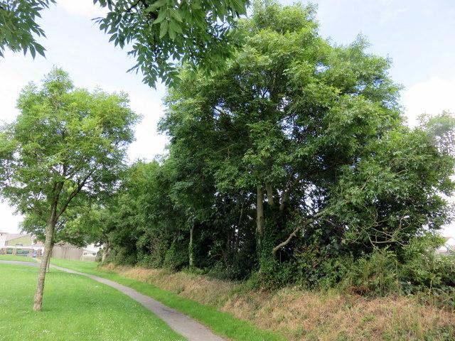Trees along the edge of Parc Lota/Lota Park