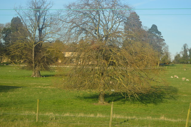 Tree by Busway