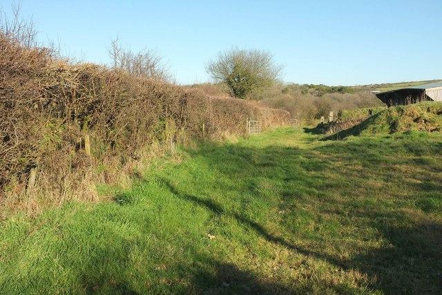 Hedge, field and barn near Pencarrow