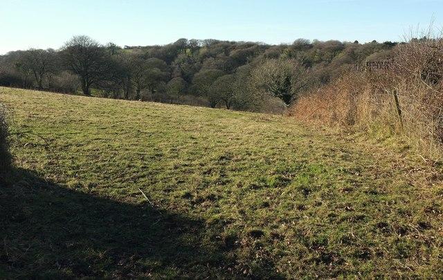 Field at Pencarrow
