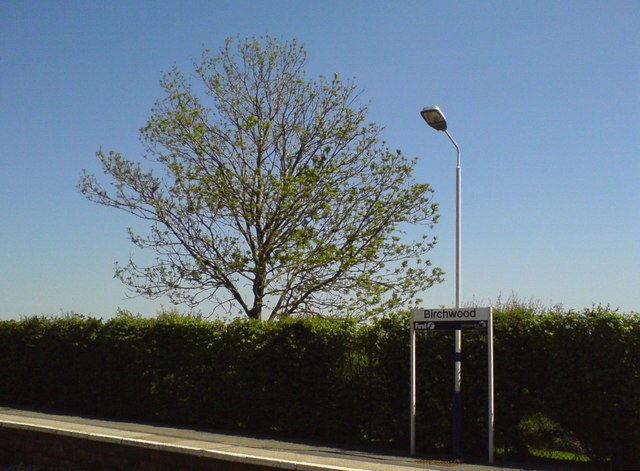 Platform sign and tree in Birchwood
