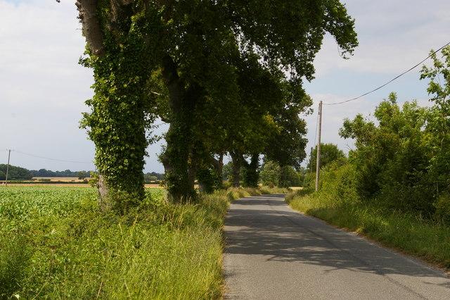 Lane north of Pattle's Farm