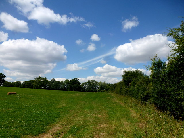 Grassy field and summer sky