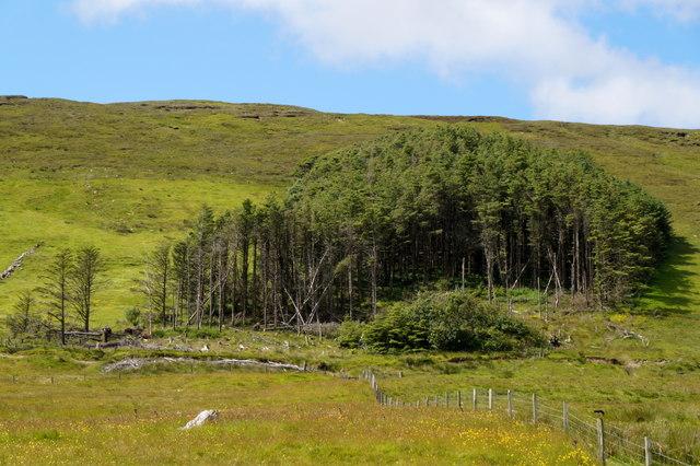 Greenlea Plantation, Kergord