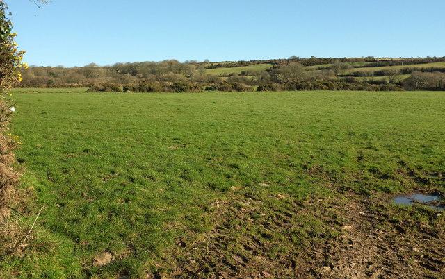 Field by the Watermill Walk
