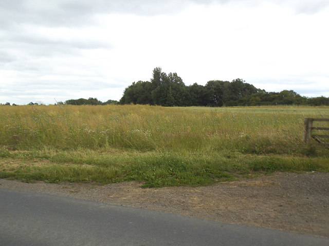 Grassland by the River Ure