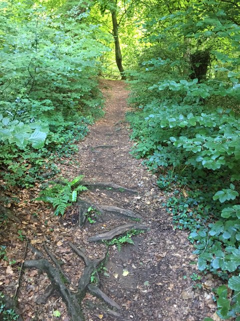 Footpath through Garth Wood
