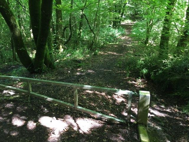 Fforestganol Track