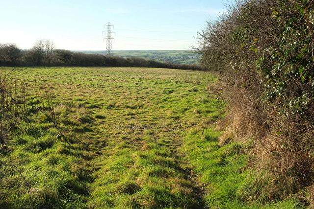 Pasture near Broadlea