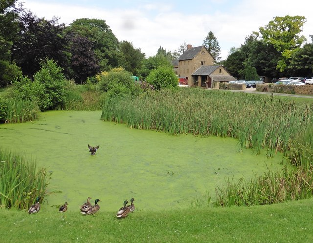 Pond at Haselbury Mill