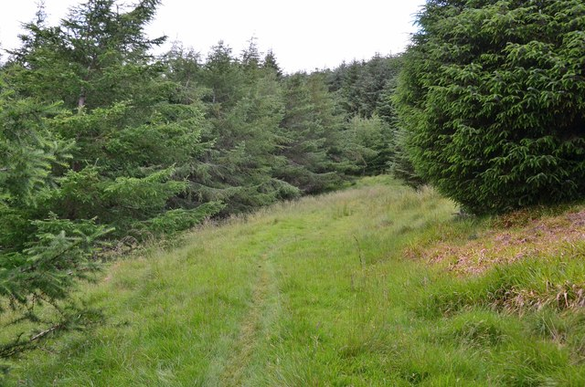 Path in Craig Douglas Forest