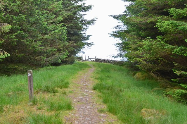 Southern Upland Way leaving Craig Douglas Forest