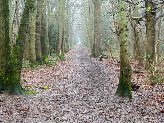 Broad Walk, Selsdon Wood