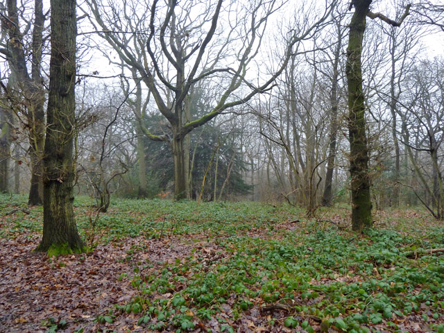 In Selsdon Wood