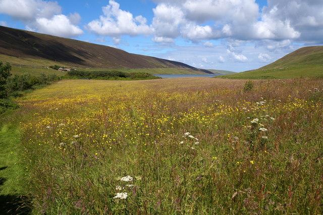 Meadow at Sandgarth, Voe